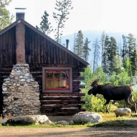Moose visiting a cabin