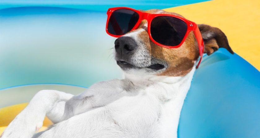 dog-days-i518718393-1024x545